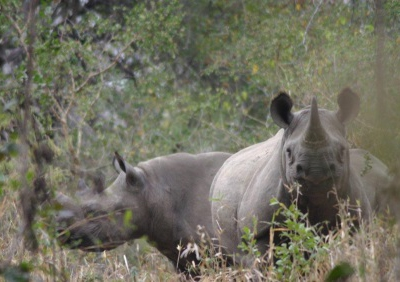 Cubs and Rhinos at Mkulumadzi, Malawi