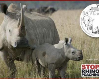 Ant's is Saving the Rhinos, Waterberg, South Africa