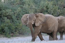 An update from Okahirongo Elephant Lodge