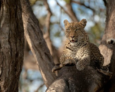 Machaba Camp nominated for the 2015 Safari Awards