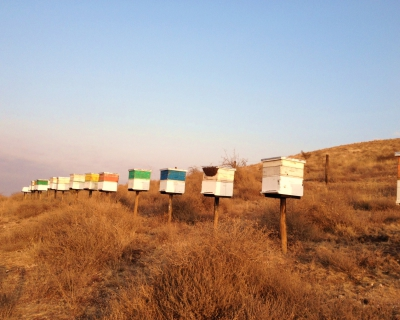 Honeybee Project at Tortilis Camp