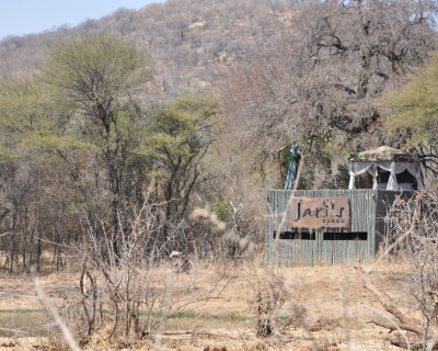 Special Sightings at Jaci's Lodge, Madikwe