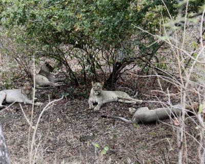 The Majete Cats, Mkulumadzi Lodge