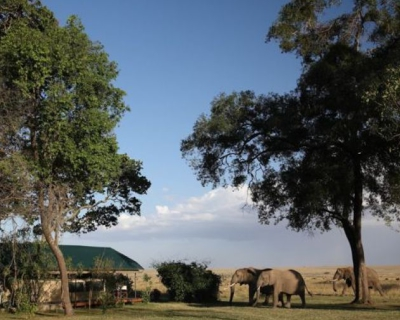 Governor's Camp- A Top 5 Kenyan Resort