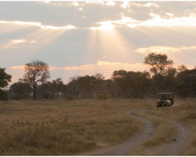 Machaba Camp's Wild Side, Botswana