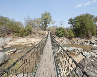 Mkulumadzi's Wild Cat Diaries