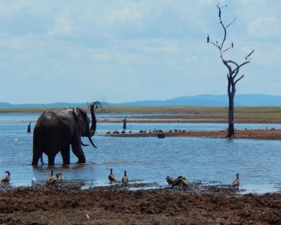 Changa's Matusadona Conservation Efforts