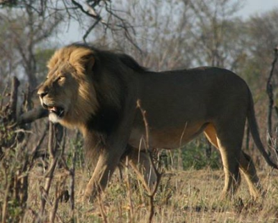 Animal sightings at The Hide, Zimbabwe