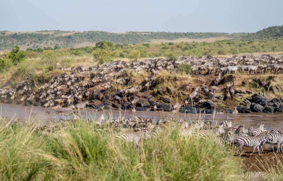 The Great Migration at Governors' Camp