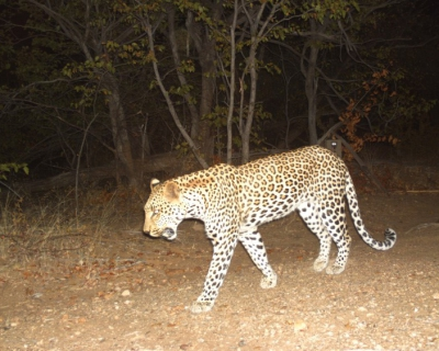 Nocturnal Creatures at Changa Safari Camp