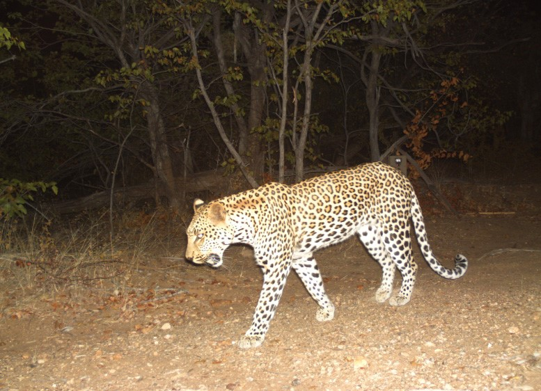 Nocturnal Creatures at Changa Safari Camp