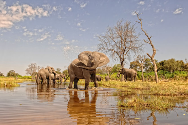 Conservation-Wildlife-Fund-Levy-Elephant