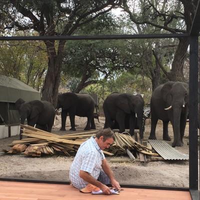 Dusty & Elephants