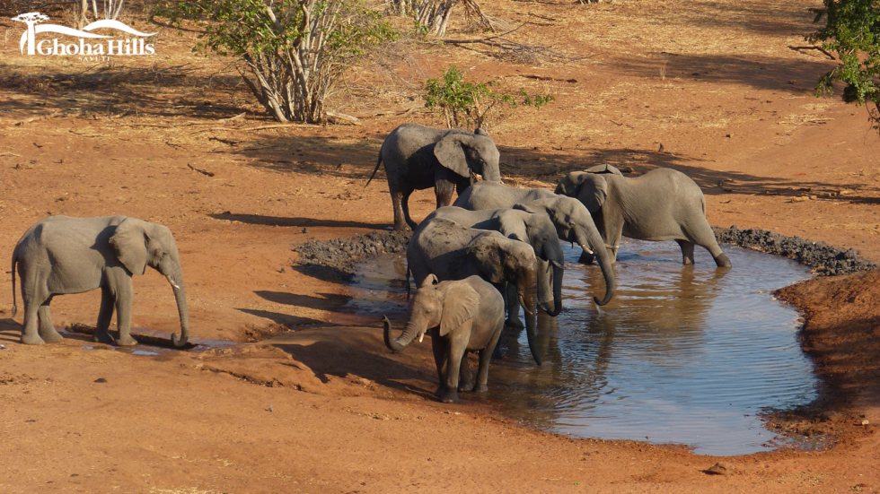 Busy Waterholes and New Lions at Ghoha Hills