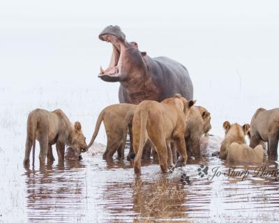 Water Wars at Changa Safari Camp