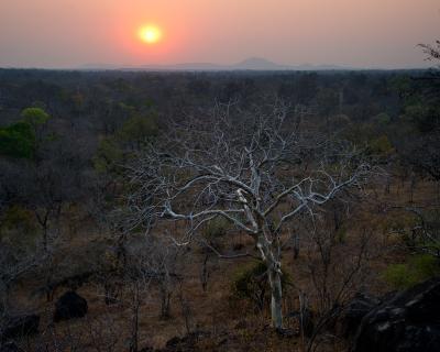 Rare Leopard Sighting at Mkulumadzi