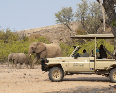 Magical Moments with Desert Elephants at Mowani Mountain Camp