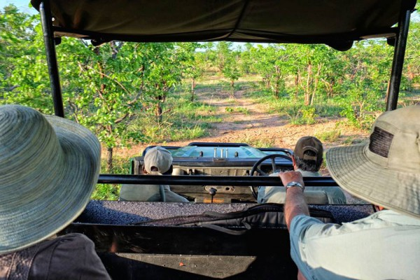 Game Drive at Musango Safari Camp