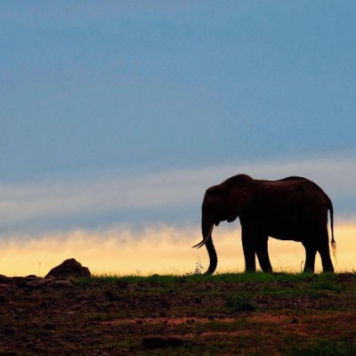 Elephant Sunset Zimbabwe