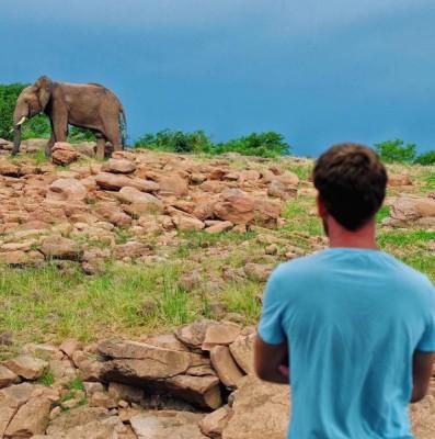Elephant at Musango Safari Camp