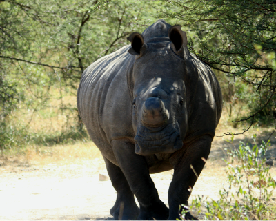 Rainfall and Rhino Tracking at Big Cave