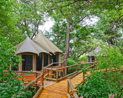 Honouring the Elephants Right of Way at Nambwa Tented Lodge