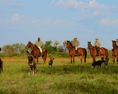 Wild Dogs Visit Guests at African Horseback Safaris