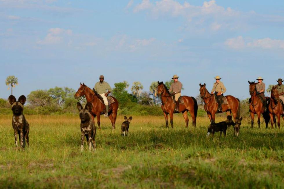 Wild Dogs Visit Guests at African Horseback Safaris
