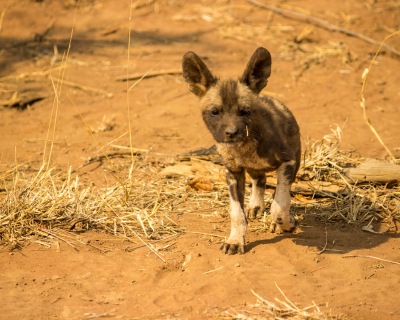 Expecting New Arrivals in Madikwe!