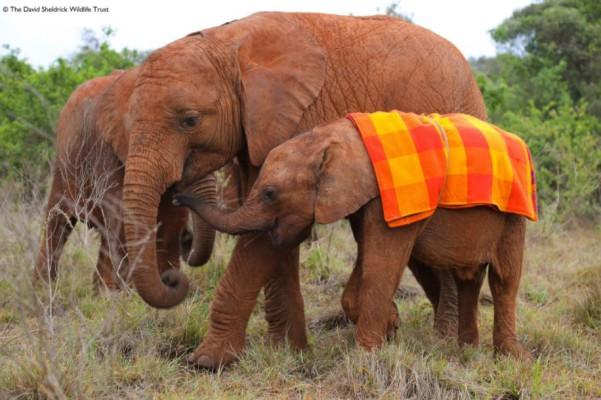 Musiara Elephant Rescue