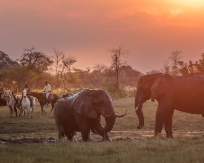Cooling off with African Horseback Safaris