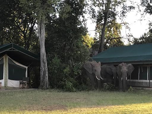 Elephant bith at GC - Harrison 2