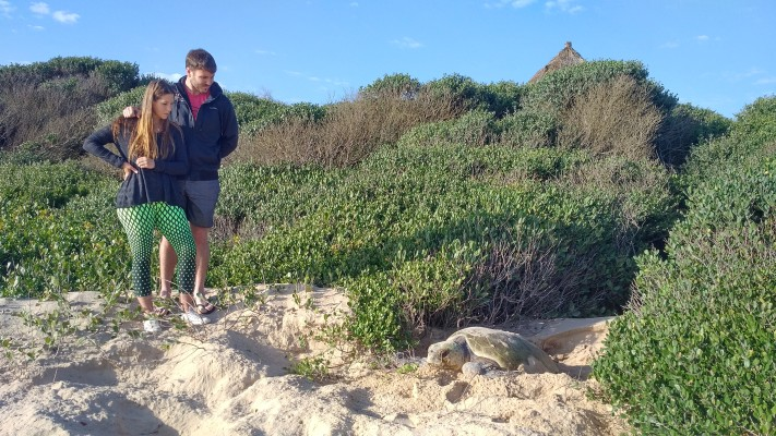 Turtle nesting at Anvil Bay