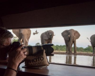 New Additions at Mashatu Game Reserve