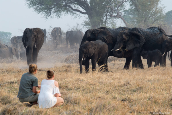 Activities Game Walk Quietly in the presence of elephants