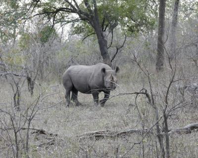 Magnificent sightings at Mkulumadzi
