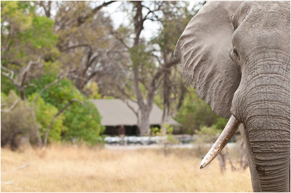 Wildlife Visitors at Machaba Camp