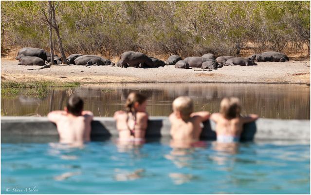 machaba-camp-hippo-2