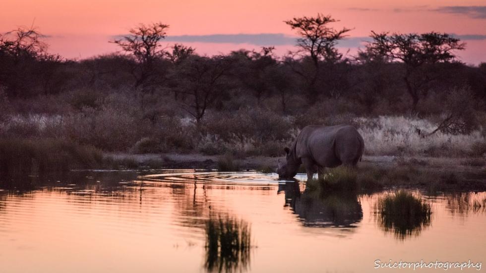Onguma Introduce Rhino Protection Levy