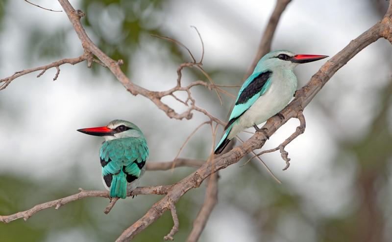 Cheerful Chirping at Nambwa