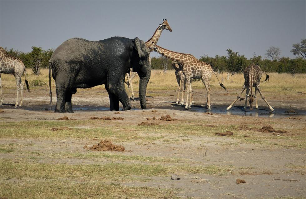 Great Wildlife Sightings at Ghoha Hills
