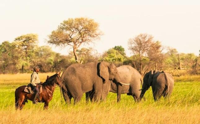 horse riding with elephants botswana