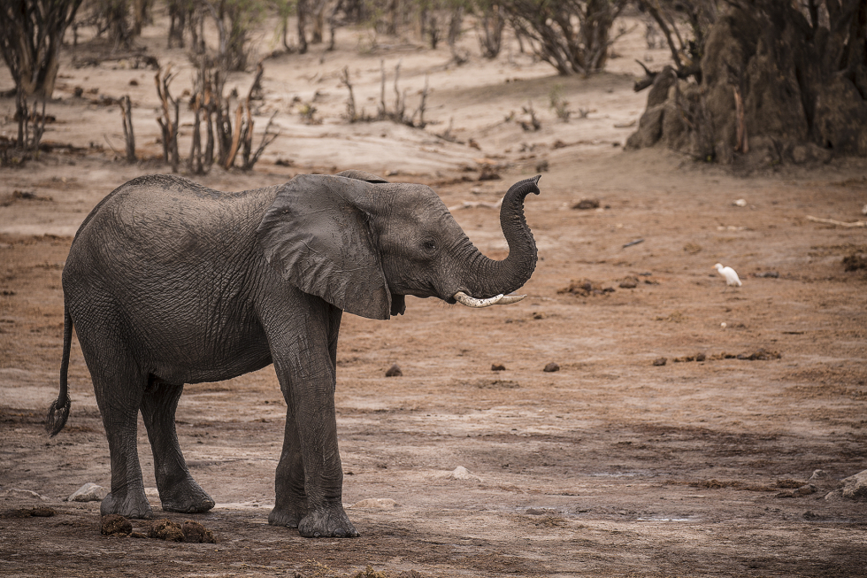 Ghoha Hills, Botswana – The Land of Elephants and Exquisite Sunsets