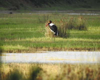 Experience the Wetlands at Makakatana