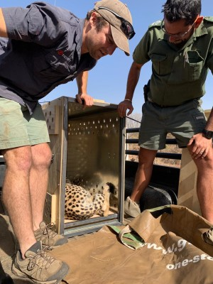 African Parks_Vincent van der Merwe manages the cheetah translocation in South Africa_Credit Jo Taylor (2)