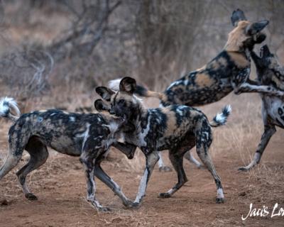 Spectacular Sightings in Magical Madikwe