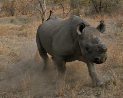 New Mkulumadzi Safari for 2020: Focus on Conservation