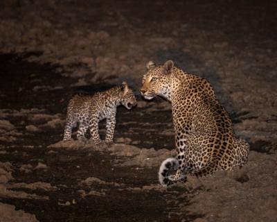 Wildlife Action at Tena Tena