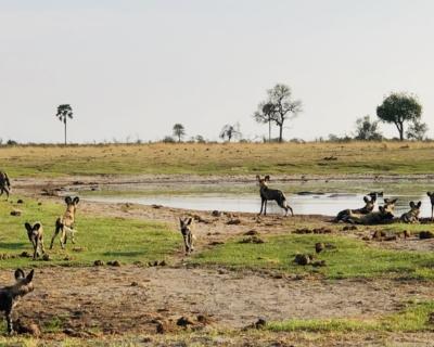 The floods have finally arrived at African Horseback Safaris